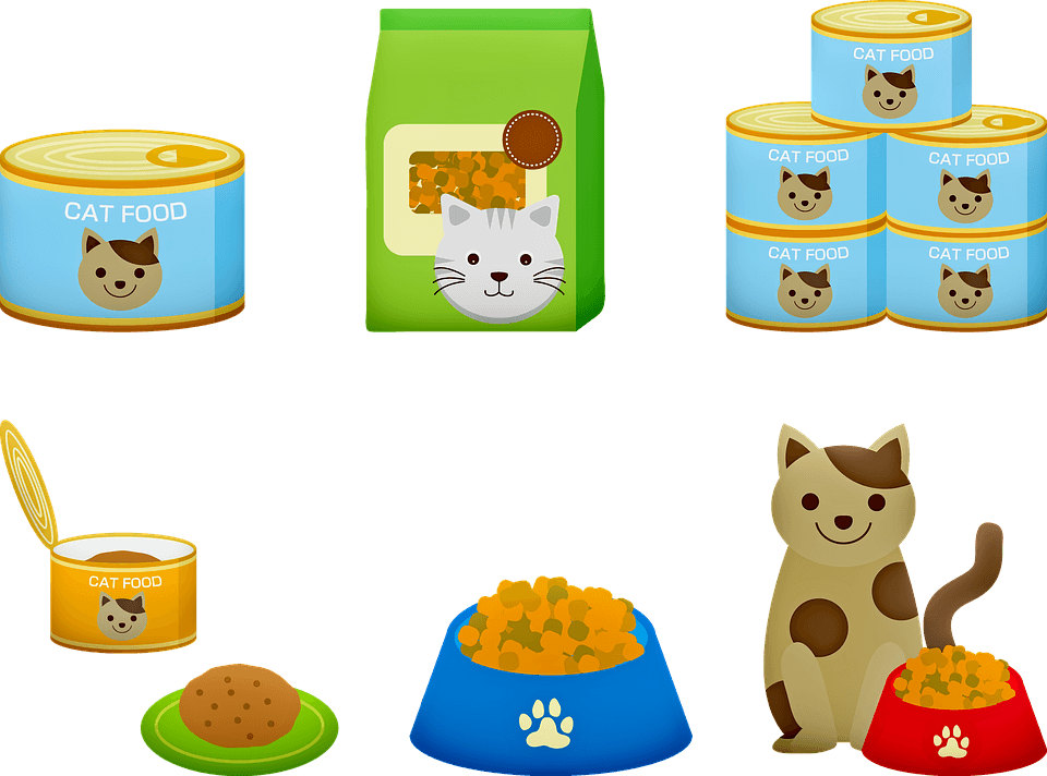 What is the best dry food for cats