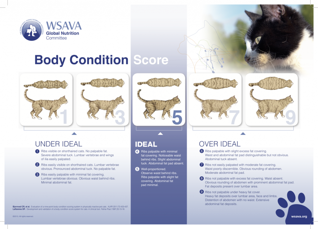 overweight cats - check body condition