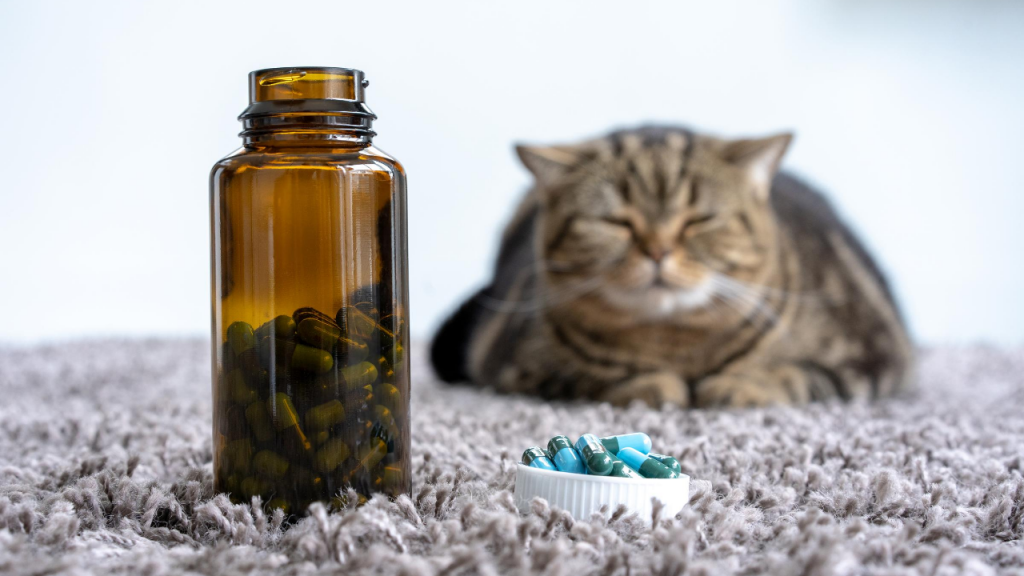 Why is Melatonin Good for Cats?