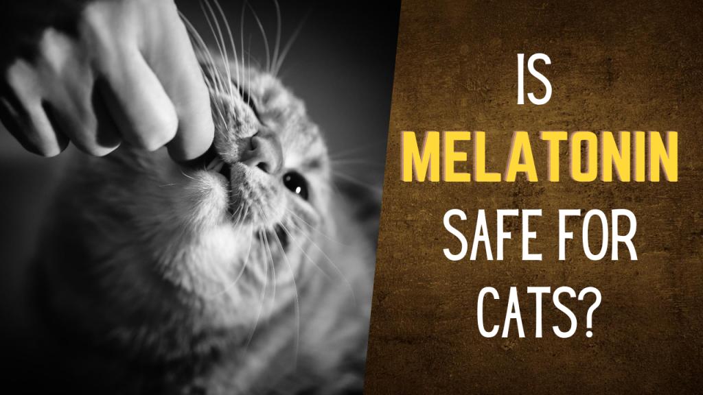 Is melatonin safe for cats?