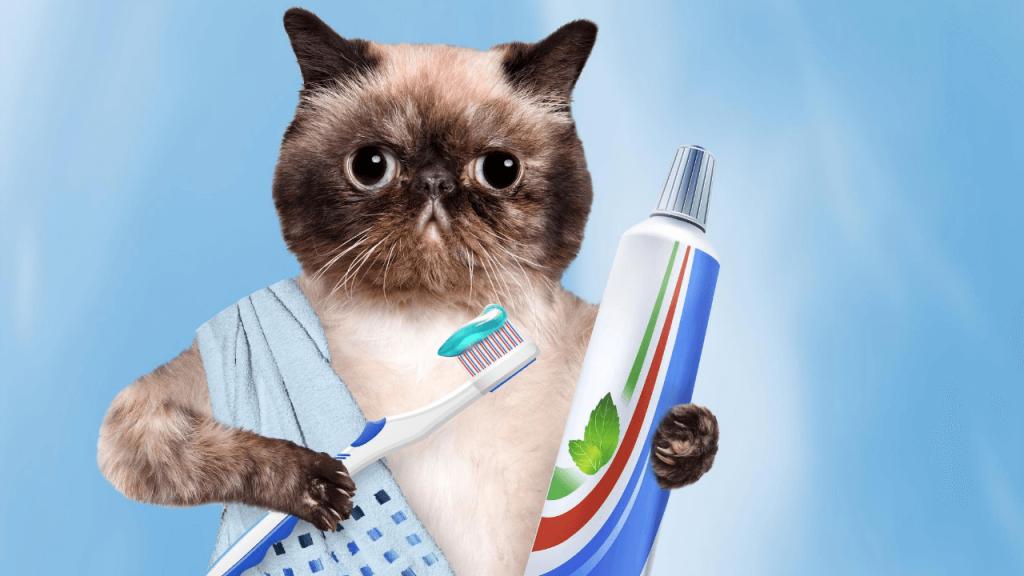 cat treats bad breath tooth gel