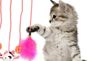play with your cat